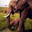 Masai Mara Residents